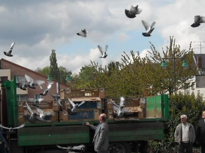photos-pigeons-et-cartes-060.jpg